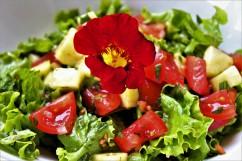 Lebanese salad garnished with a nasturtium